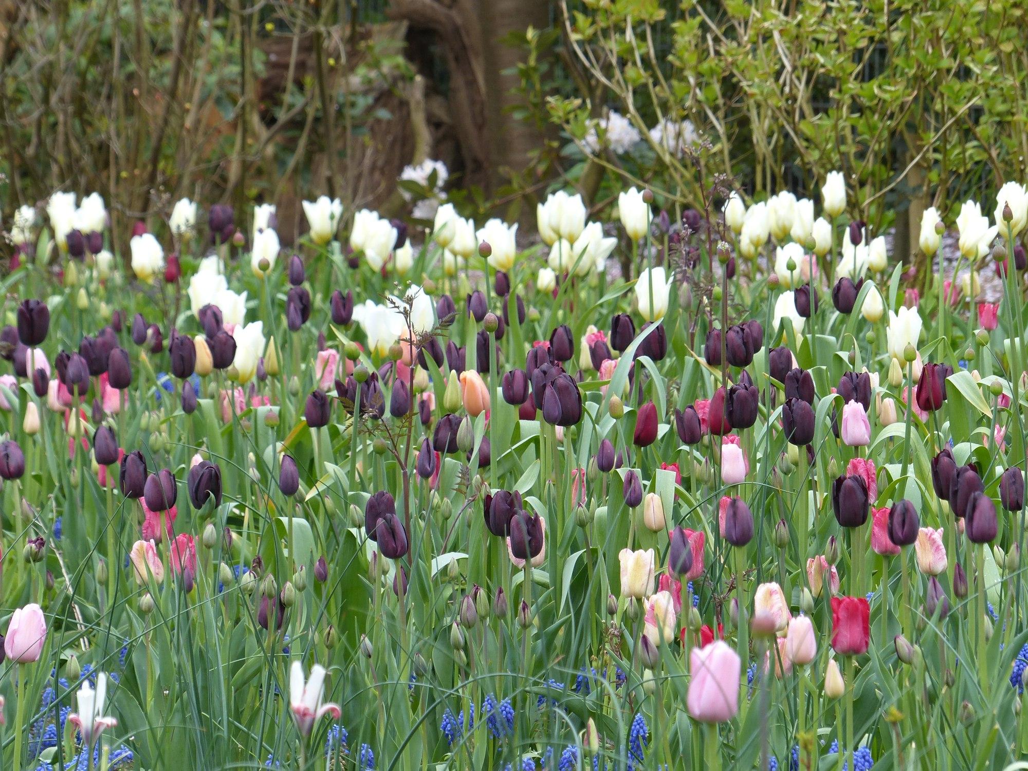 Galerie Staudengarten Pflanzen Gärtner