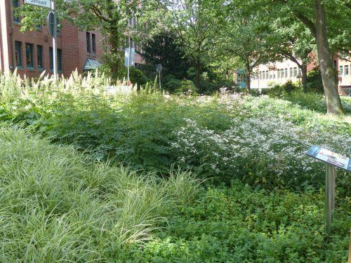 Gleiche Fläche nach der Bepflanzung im  August 2019