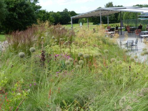 Golfplatz Grossensee nach der Neubepflanzung im Juli 2020