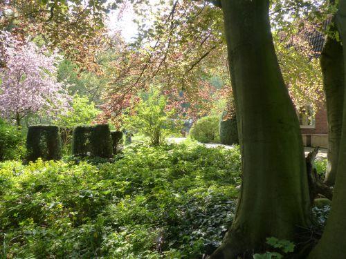 Licht und Schatten unter einer Buche in einem Hamburger Privatgarten