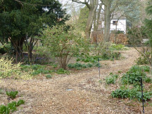 Die Entwicklung eines Hamburger Schattengartens April 2018