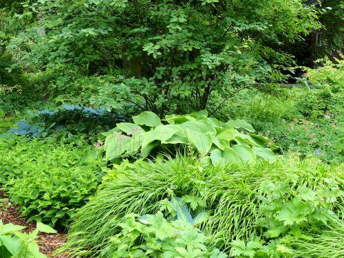 Schattenpflanzung in einem Privatgarten in Hamburg-Volksdorf
