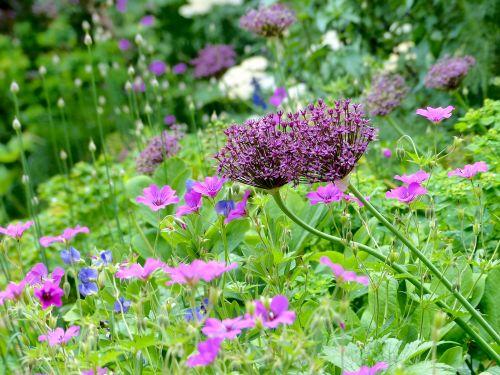 Blüte in Trockenheit und Sonne in einem Hamburger Privatgarten
