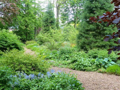 Schattige Pflanzung in einem Hamburger Privatgarten