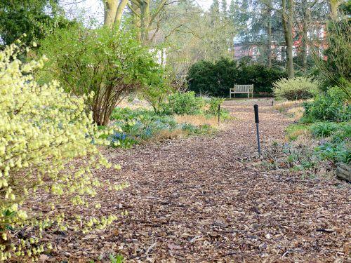 Die Entwicklung eines Hamburger Schattengartens März 2015