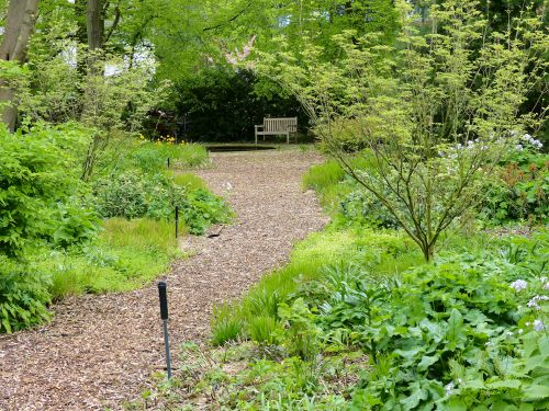 Die Entwicklung eines Hamburger Schattengartens Mai 2016