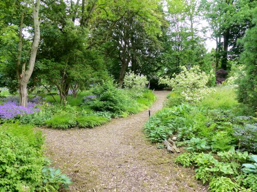 Die Entwicklung eines Hamburger Schattengartens Juni 2016