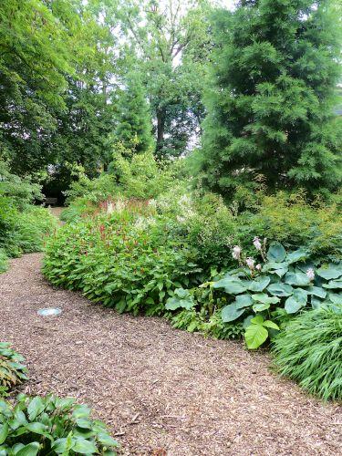 Die Entwicklung eines Hamburger Schattengartens Juli 2017